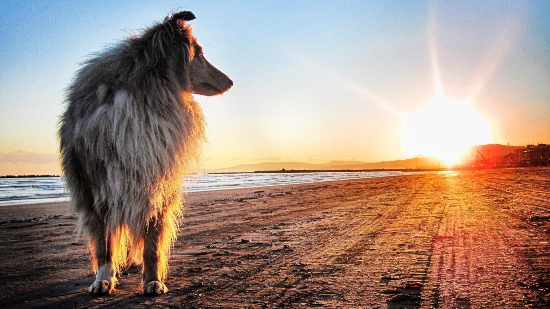 crème solaire chien