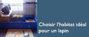 Choisir l'habitat idéal pour un lapin