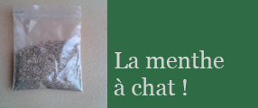 menthe a chat