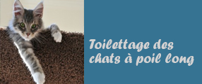 toilettage une