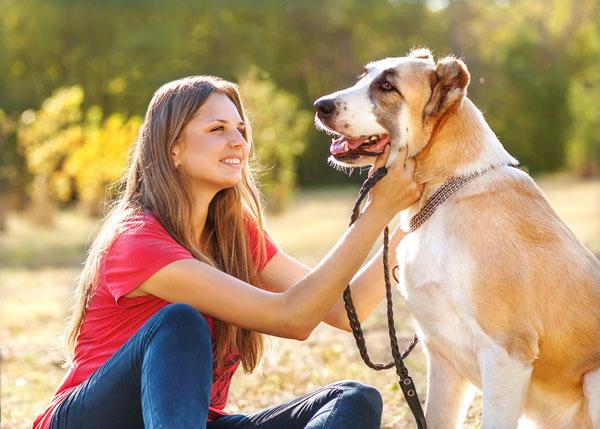 promenade de chien les solutions de promenade pour chien. Black Bedroom Furniture Sets. Home Design Ideas