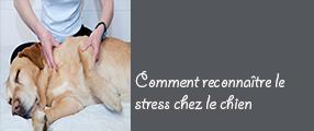 stress-chien