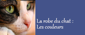 couleurs chat