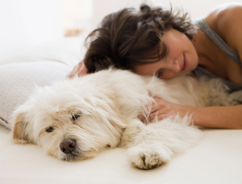 5 raisons de dormir avec son animal