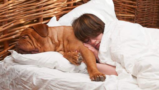 5-raisons-dormir-chien-4