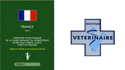 source:conseils vétérinaires.com
