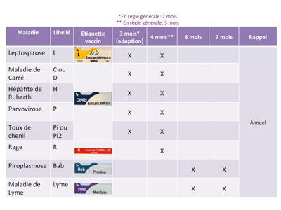 Vaccin Chiot Calendrier.Les Vaccins Du Chien Chien Petsitting Fr