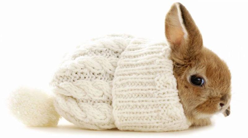 Le bien être du lapin