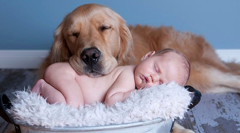 Comment pr senter son b b son chien chiens - Image bebe chien ...