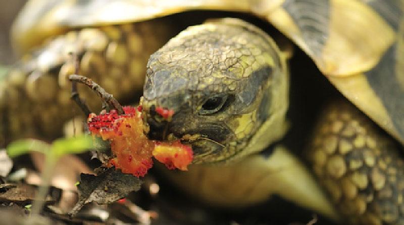 source:tortue.ooreka.fr