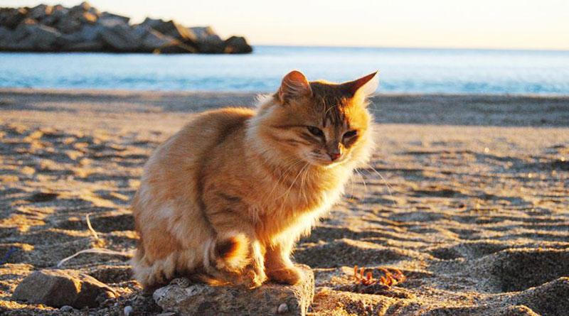 source:unitedcats.com