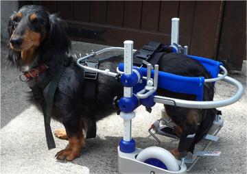 Chariot de réeducation pour chien