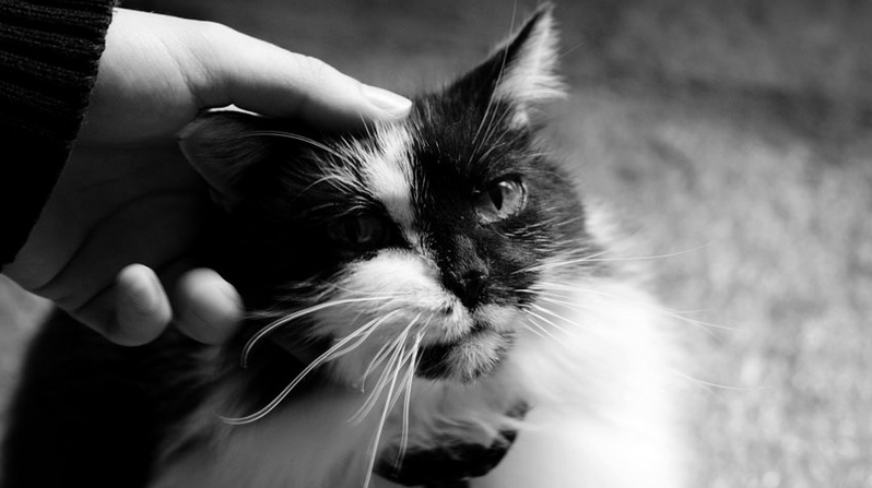 bien s'occuper de son chat
