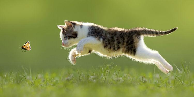 chaton chasseur