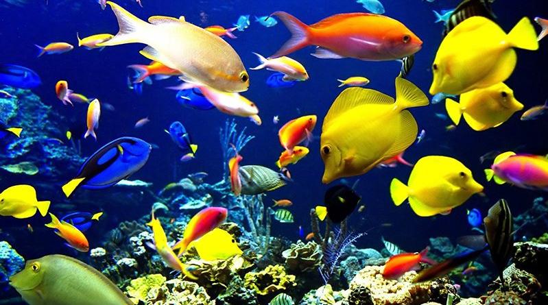 débuter avec un aquarium