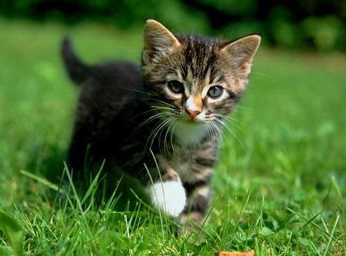 chaton