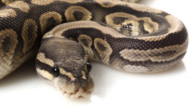 python NAC