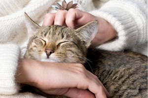 caresse chat ronronthérapie