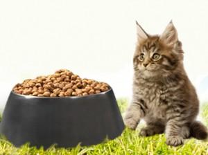 obesite du chat