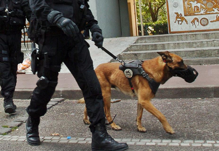 Diesel chienne du raid