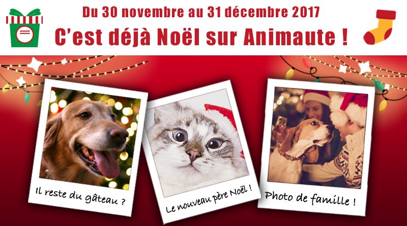 visuel-noel-article-animaute