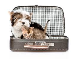 animaux valise
