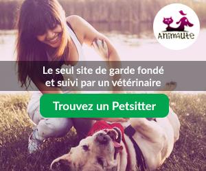 garde-animaux-avec-animaute-seul-site-fonde-et-suivi-par-un-veterinaire