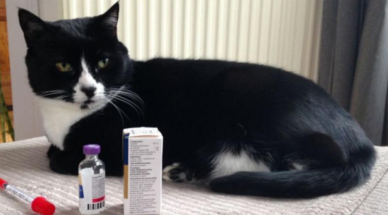 mon-chat-est-diabetique
