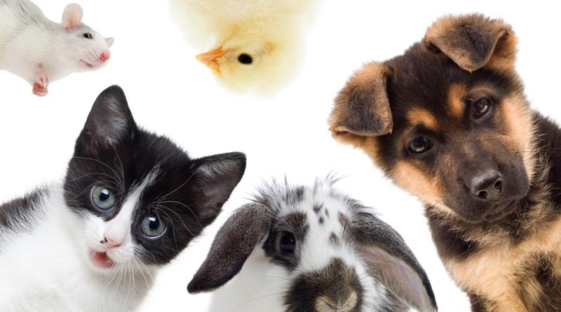plusieurs-animaux-de-compagnie-regardant