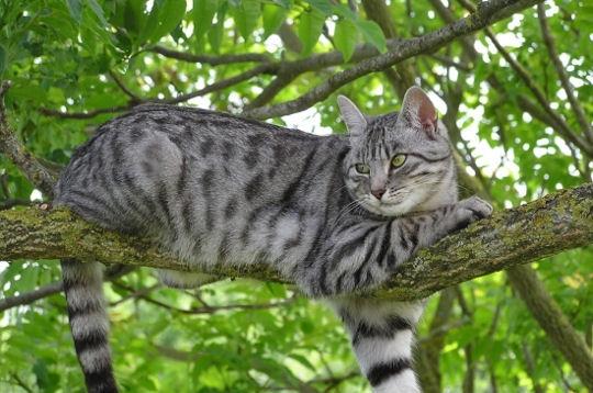 chat dans arbre