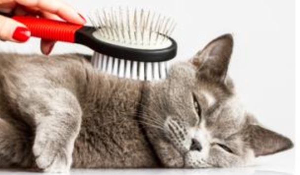 brushing-cat