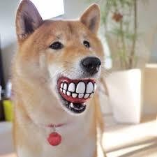 chien balle