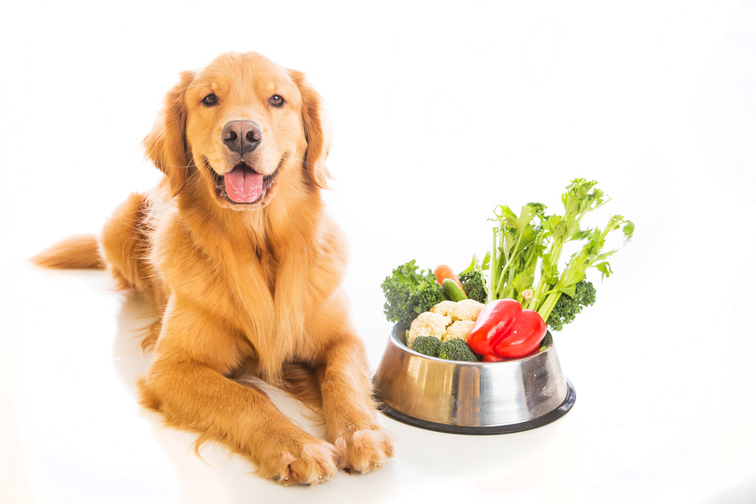 A beautiful golden retriever dog with a smile on his face laying next to a bowl of fresh vegetables.