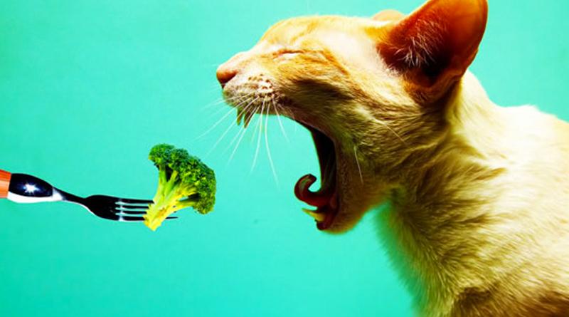 chien-chat-vegetariens