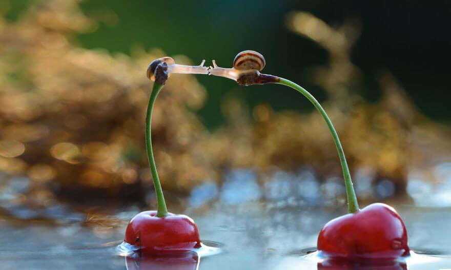 escargot-saint-valentin