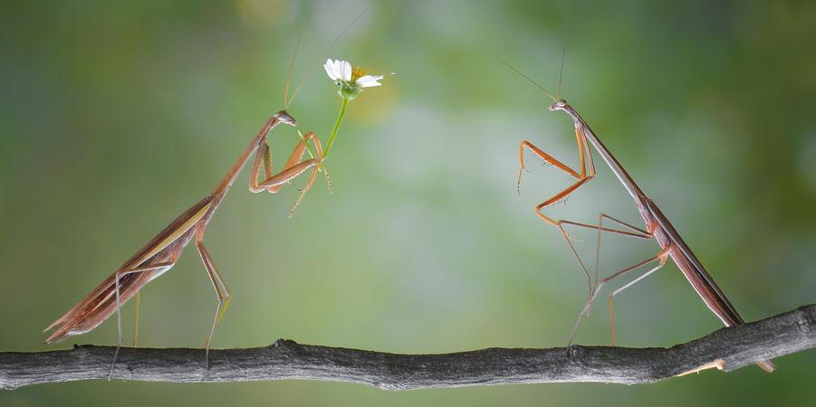 insectes-saint-valentin