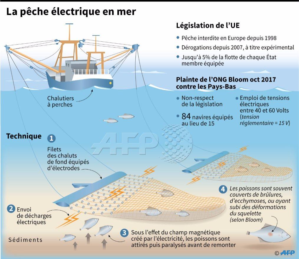 peche electrique