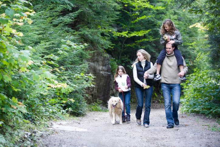 Promener son chien en période de chasse