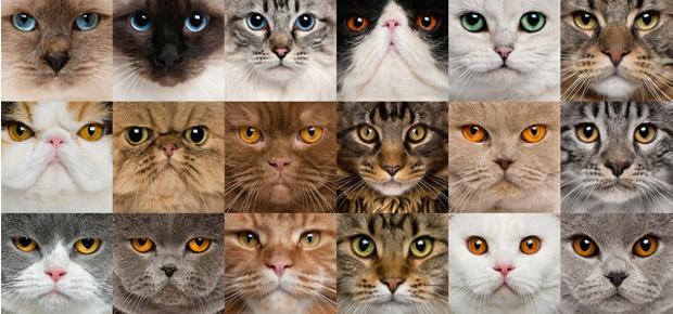 5 «races» de chats peu connues