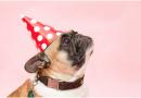 Dix idées cadeaux pour votre chien