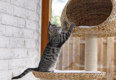Les accessoires indispensables du chat